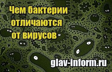 изображенеи Чем бактерии отличаются от вирусов