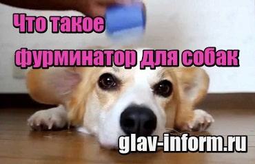 миниатюра Что такое фурминатор для собак и как им пользоваться